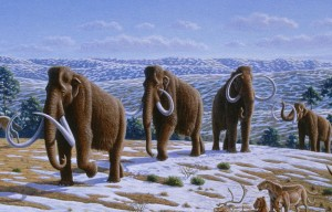 800px-Woolly_mammoth_(Mammuthus_primigenius)_-_Mauricio_Antón